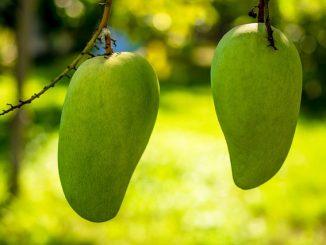 Z mango szybko schudniesz