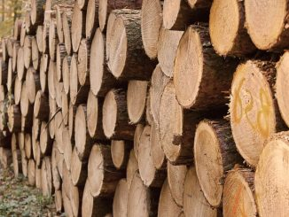 drewno kominkowe najlepsze